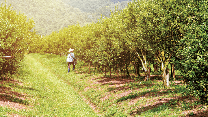 تقليم الأشجار : تعلم كيفية تشحيل الأشجار المثمرة والاوقات المناسبة